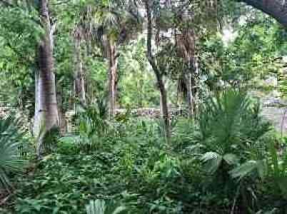 Jungle garden view