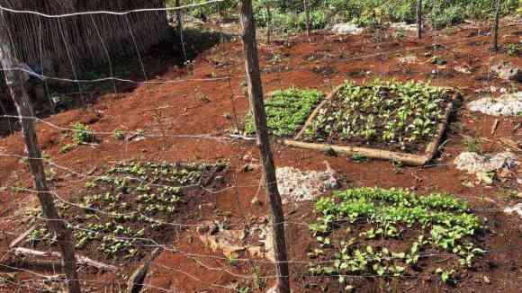 plántulas de hortalizas