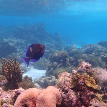 Plongées Tobago Cays 2018