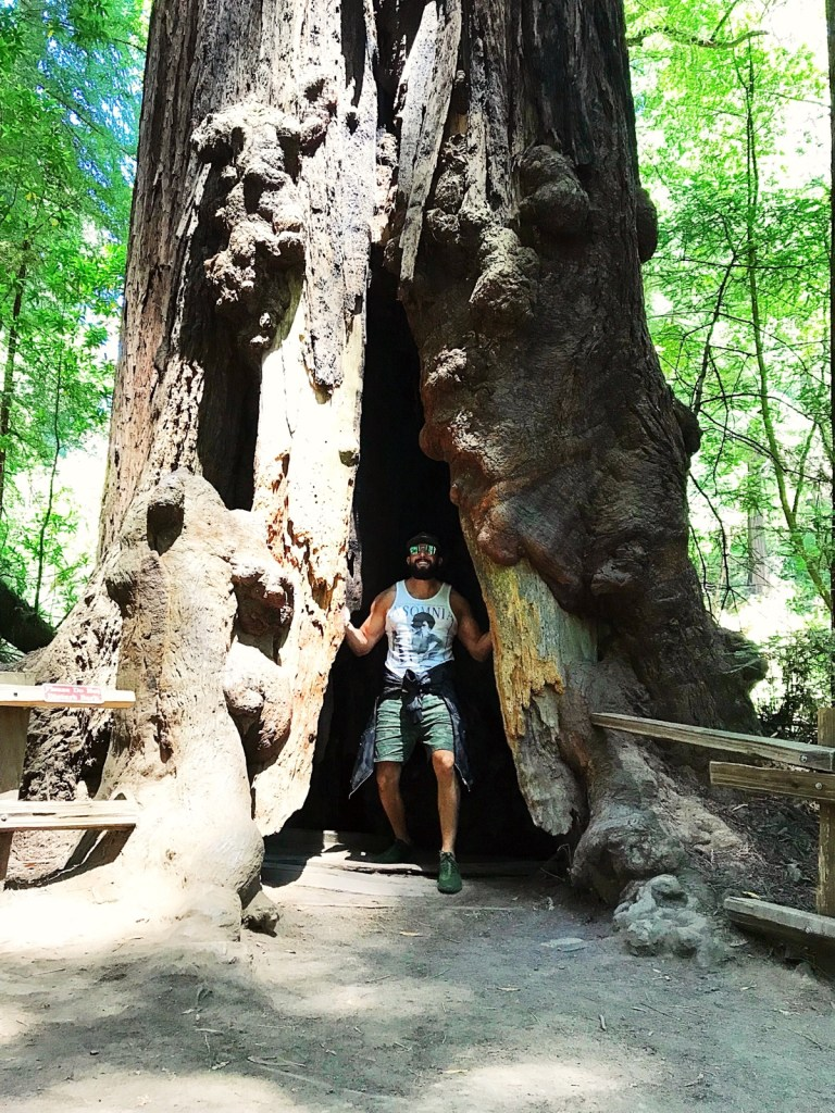 Adam in a Giant Red Wood