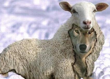 Le loup Vitus Huonder déguisé en agneau