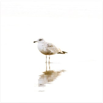Seagull No 1 - Bird art print by Cattie Coyle Photography