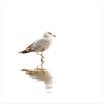 Seagull No 2 - Seagull wall art by Cattie Coyle Photography