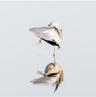 Seagull No 6 - Coastal photography print by Cattie Coyle Photography