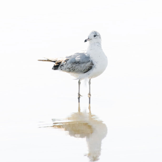 New seagull prints: Seagull No 14 - Bird fine art print by Cattie Coyle Photography
