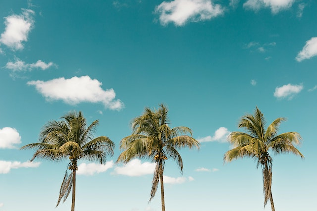 ココナッツの木の上で3年間生活した男【フィリピン驚きの実話】