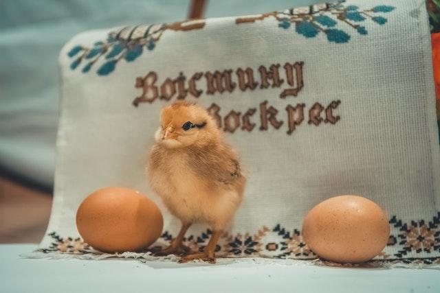 【バロットの作り方・レシピ公開】フィリピンの珍味は孵化寸前の卵