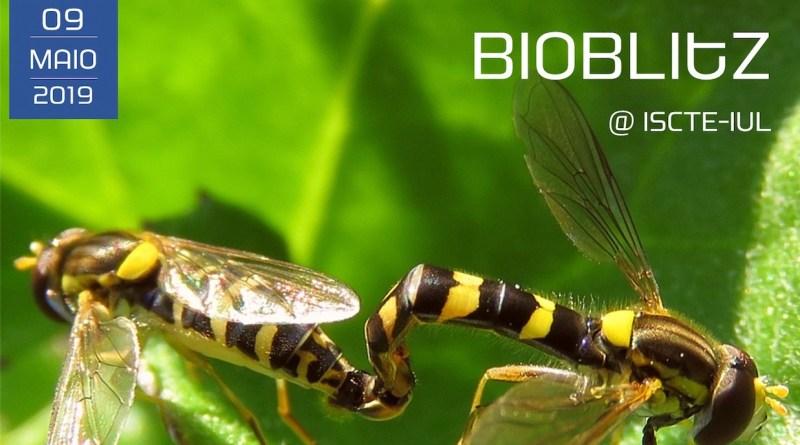9 MAI | BioBlitz @ISCTE-IUL