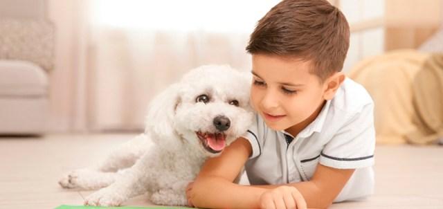 bichon frise raza perros departamentos