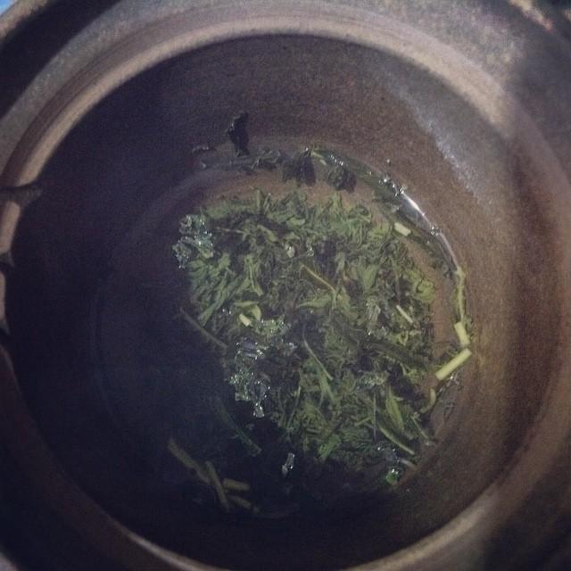 開いてゆくお茶の葉っぱ。お煎茶、月ヶ瀬健康茶園。 #お茶の時間 from Instagram