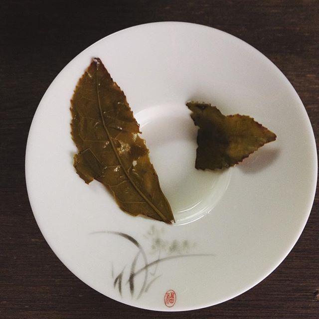 烏龍茶は、半発酵茶。お茶の葉っぱは縁がギザギザで、発酵は縁から起きる。茶色がかっているのがわかるかな。 #半発酵茶 #烏龍茶 #お茶っ葉 (Instagram)