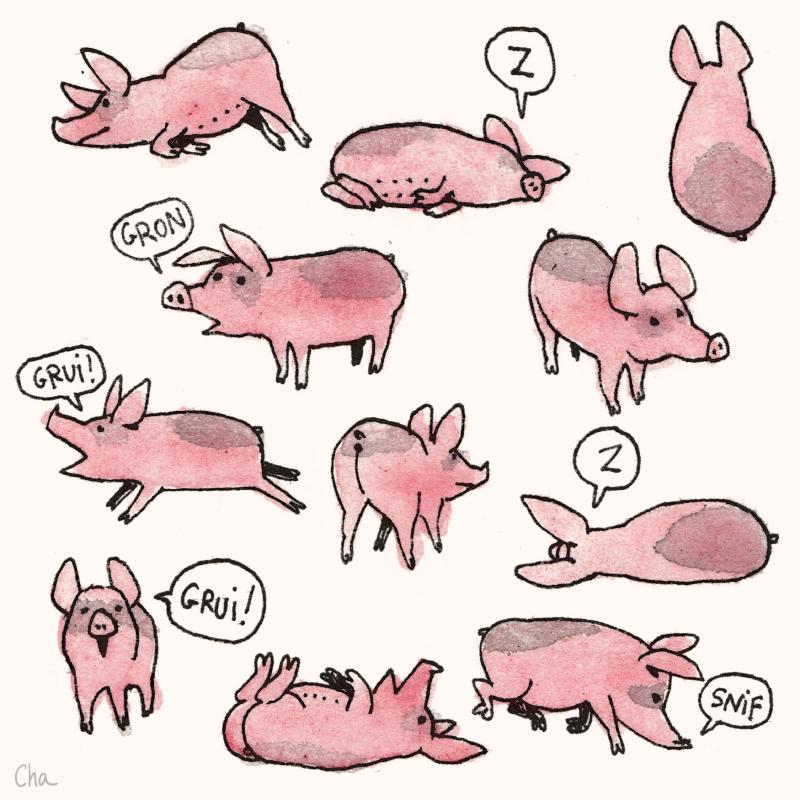 Roupette the Pig le cochon