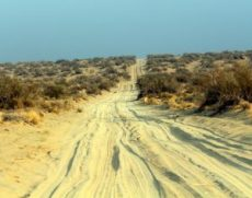 -desert