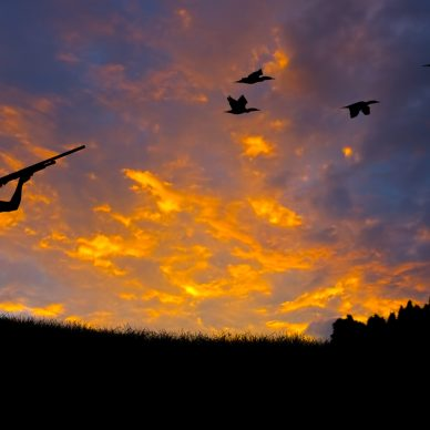 Silhouette of a hunter aiming at birds against an evening sunset.