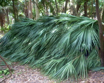 Palm Frond Lean-to