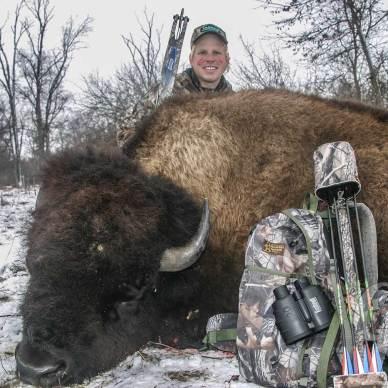 Downed buffalo