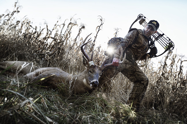 Bowhunter dragging whitetail deer through cornfield
