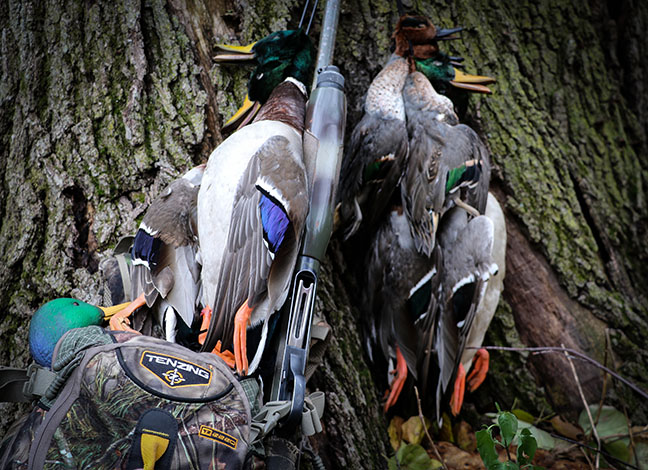 A harvest of ducks hanging with a shotgun and camouflage pack