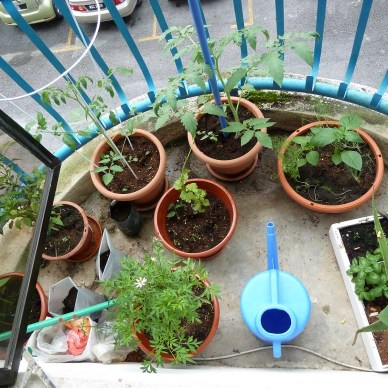 Growing beans, tomatoes, peppers and cucumbers on a small balcony.