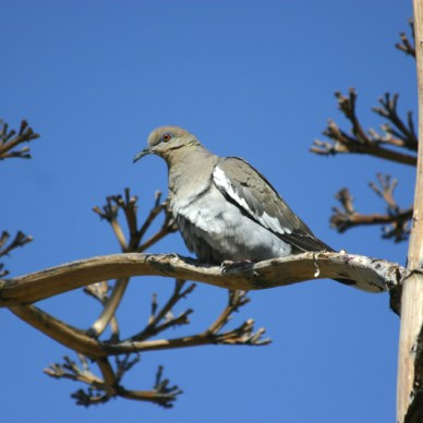 Dove sitting on tree branch with blue sky in the background