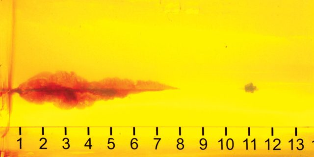 Hornady Critical Defense .38 Special Gel Test