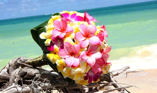 12 Best Flowers to Gift Your Beloved on Valentine's Day-frangipanis