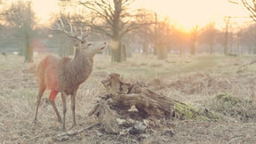 deer stalking guides