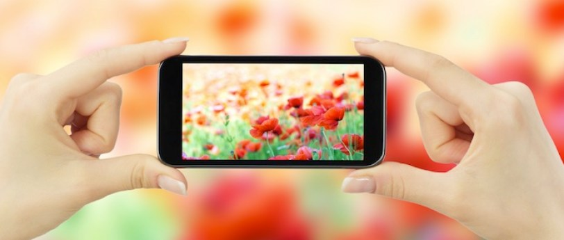 smartphone-taking-pic-of-flowers