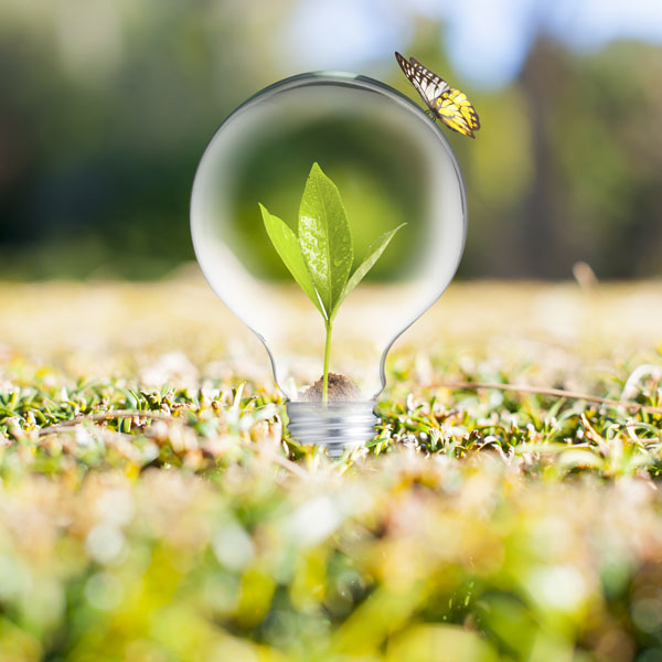 eco-friendly-led-Light-Bulb-on-Green-Grass