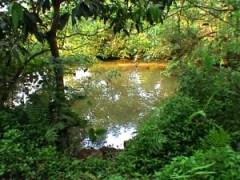 Spring fed pond, Sauta Vaddo