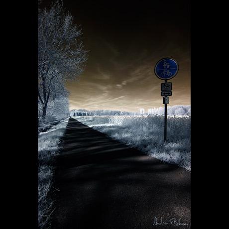 Fahrradweg am Rapsfeld (II.)