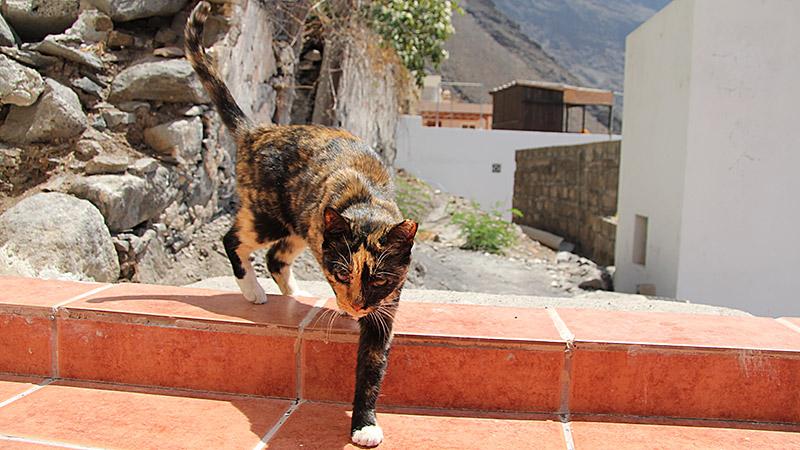 Katze zu Besuch