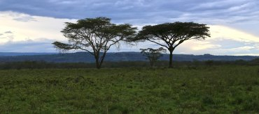 Kenia, Lake Nakuru