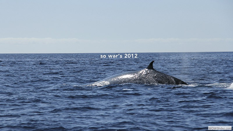 Whale watching 2012
