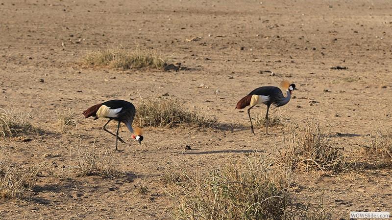 Bunte Vögel in der Savanne