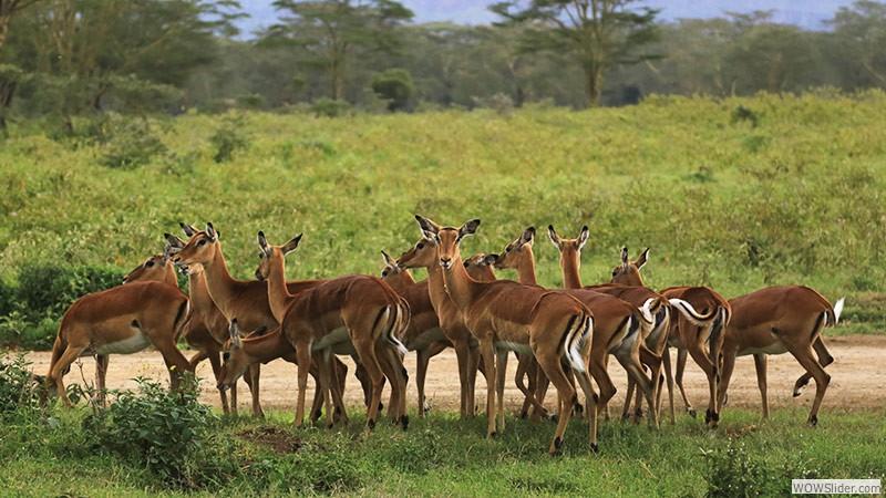 Kwa heri, Kenia!