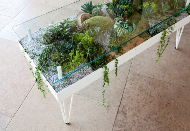 7 650x449 - Sukulent Moved To The Table! Coffee Table Terrarium Made
