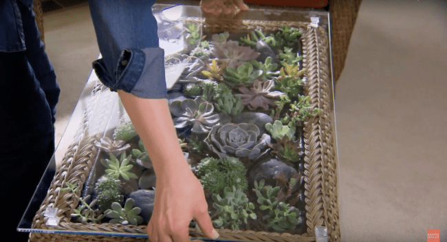 Teraryum Sehpa Asama 15 min 650x352 - Sukulent Moved To The Table! Coffee Table Terrarium Made