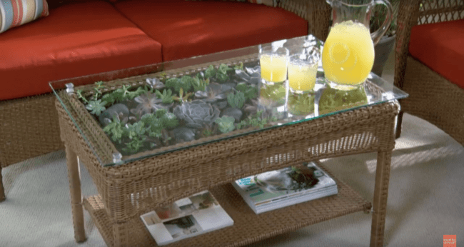 Teraryum Sehpa Asama 16 min 650x346 - Sukulent Moved To The Table! Coffee Table Terrarium Made