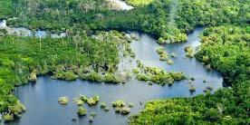 Foto oleh Neil Palmer/CIAT untuk Center for International Forestry Research (CIFOR)