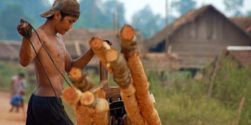 Lake Sentarum, West Kalimantan - Indonesia, 2009.  ©Center For International Forestry Research/Tim Cronin