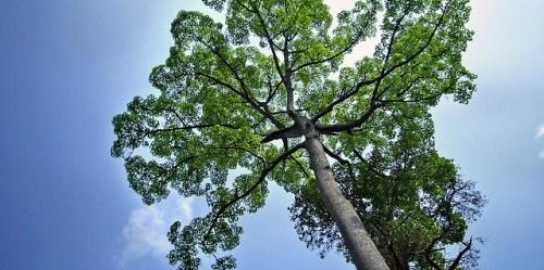 Kehutanan bukanlah sektor terisolasi yang tidak terhubung dengan dunia selain pepohonan. teddy-rised