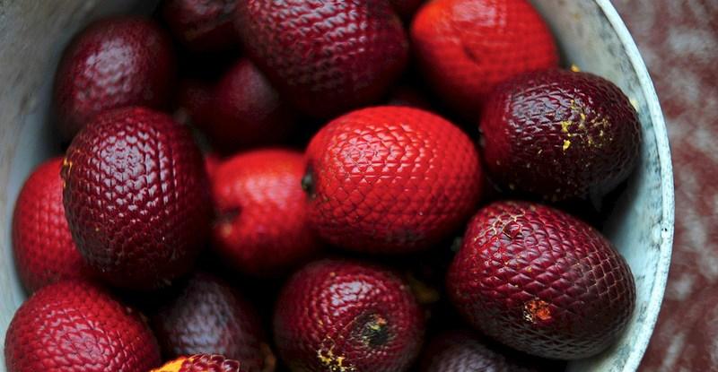 Dibutuhkan riset lebih lanjut tentang komposisi nutrisi bahan pangan dari hutan dibandingkan dengan makanan lain.