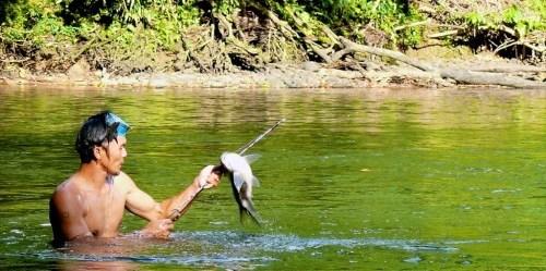 Seorang nelayan menangkap ikan di perairan hulu sungai Malinau, Malinau, Kalimantan Timur. Michael Padmanaba/CIFOR