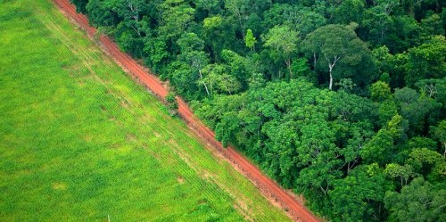 What steps can be taken to restore ecological integrity to rainforests in the Asia-Pacific? Kate Evans/CIFOR