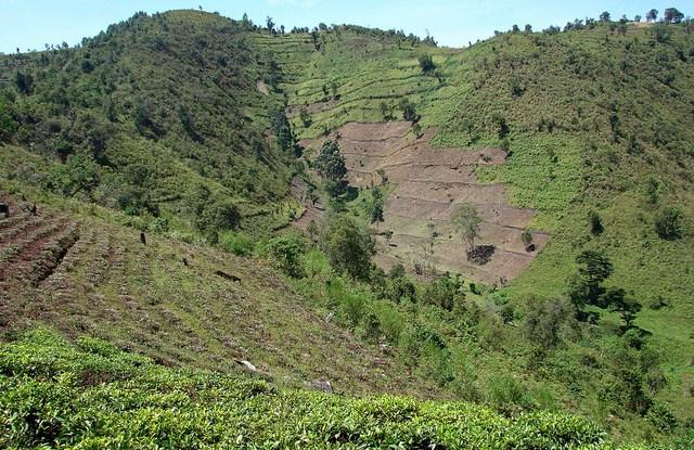 Penilaian terbaru dari penyebab langsung deforestasi dan degradasi hutan di 100 negara berkembang menemukan bahwa pertanian adalah penyebab dari 73 persen deforestasi, terbagi antara pertanian komersial (40 persen) dan pertanian subsisten (33 persen). CIFOR / Douglas Sheil