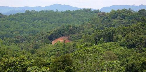 Keamanan kepemilikan lahan merupakan esensi REDD+, sebuah inisiatif berbasis kinerja global yang bertujuan untuk mengurangi deforestasi dan degradasi dengan menyediakan insentif =dan penghargaan kepada pengguna sumber daya dan manajer, dengan tujuan yang lebih luas untuk mengatasi perubahan iklim dalam jangka panjang. Mokhamad Edliadi/CIFOR