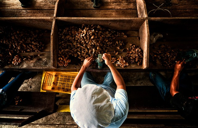 Every day the castañeros walk into the forest and collect the Brazil nut fruits, covering them with palm leaves.