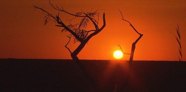Vast areas of the Cerrado have been converted into pastureland, corn, sugarcane and soybean plantations.