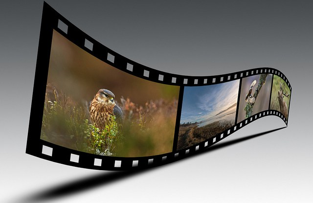 Do filmmakers have a responsibility to help protect the species they film?